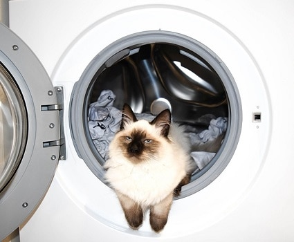 How to wash stuffed animal chew toy in washing machine for pet dog