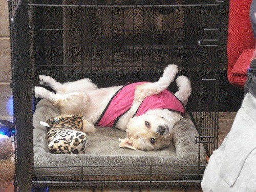 Puppy crate training during first year tips what to do avoid