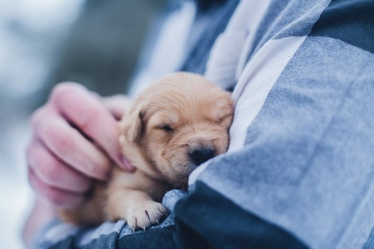 What to do when bringing puppy home first day 1