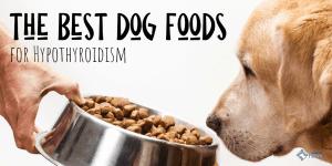 Best Dog Foods for Hypothyroidism