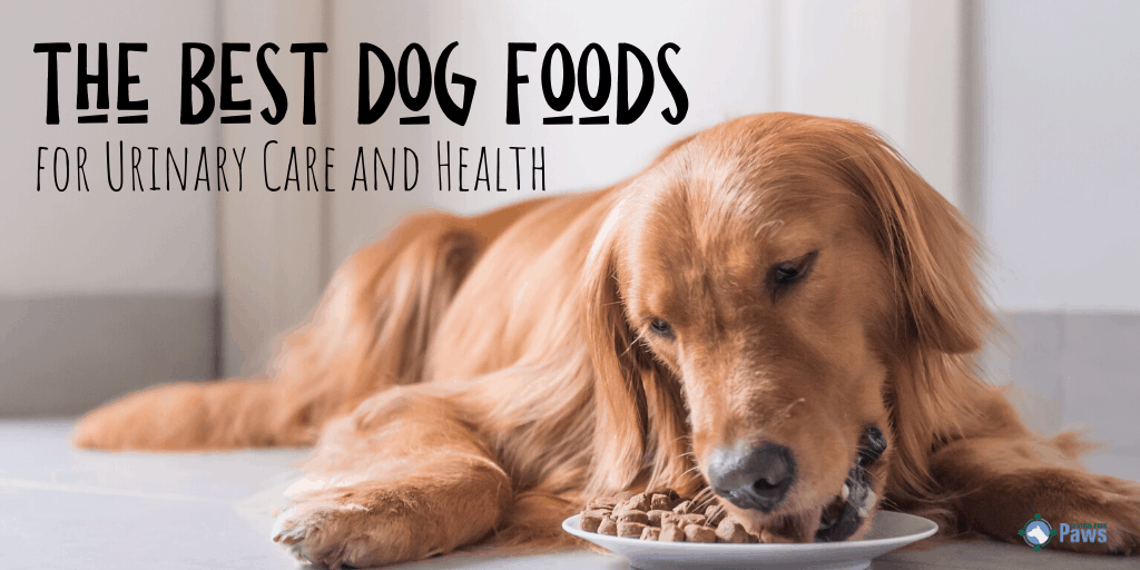 Best Dog Foods for Urinary Care and Health