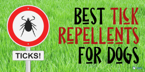 Best Tick Repellents for Dogs for Protection and Prevention