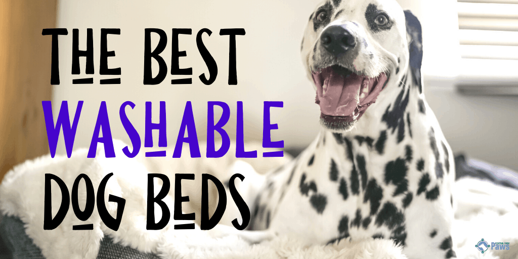 Best Washable Dog Beds with Removable Covers