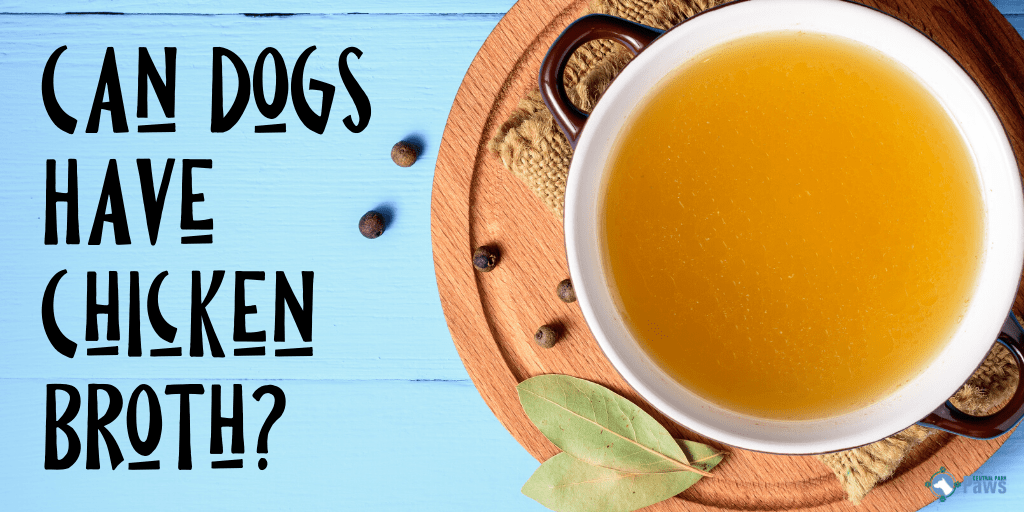 Can Dogs Eat Chicken Broth_