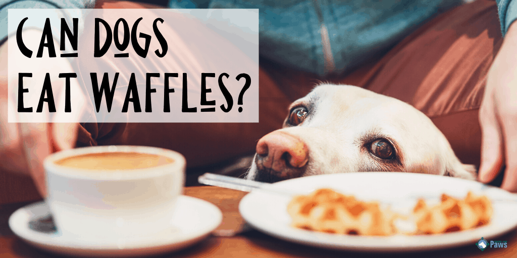 Can Dogs Eat Waffles: Is it Safe for My Dog to Have Eggos_