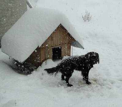 Clean your dog house before winter to keep your dog warm safe and happy