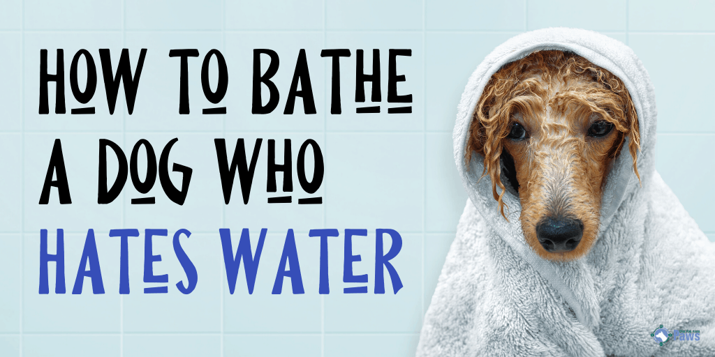 How to Bathe a Dog Who Hates Water