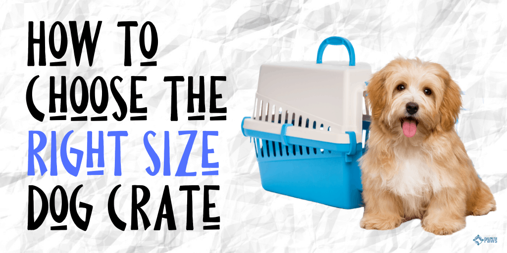 How to Choose the Right Size Crate for Your Dog (1)