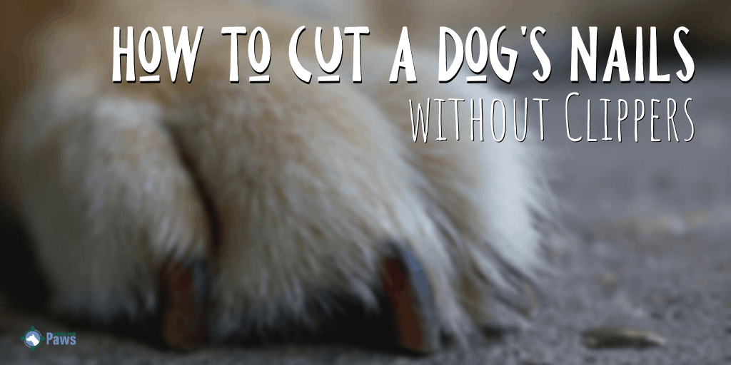 How to Cut a Dogs Nails without Clippers