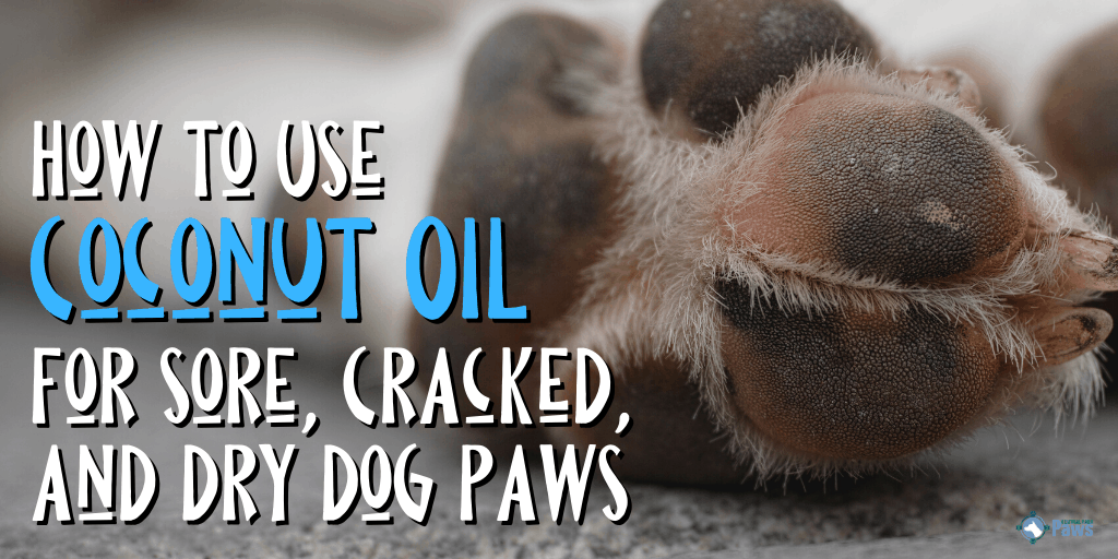 How to Use Coconut Oil for Sore, Cracked, and Dry Dog Paws