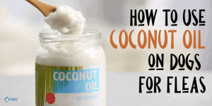 How to Use Coconut Oil on Dogs for Fleas