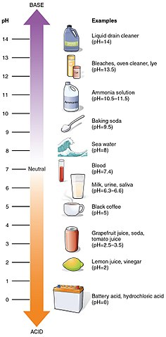 Why does UTI hurt change urine pH levels to be more acidic