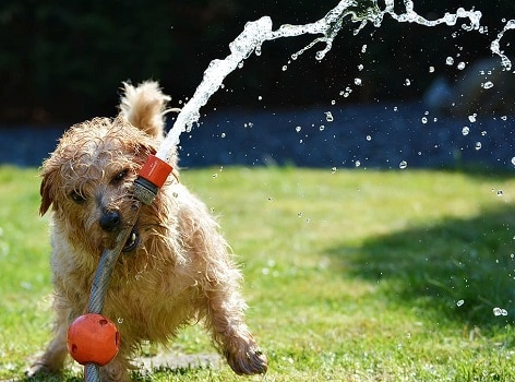 Why should you wash your outdoor dog house kennel when how