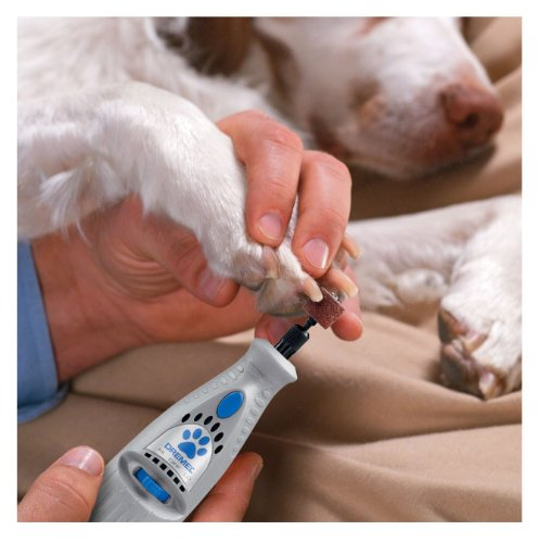 Use dog nail grinding tool to avoid having to sedate your dog