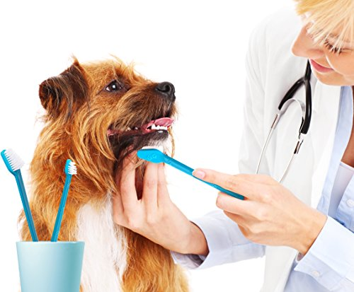 Coconut oil for dog teeth dental health benefits safety