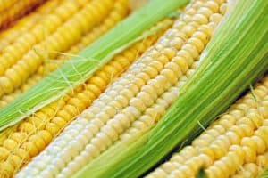 Is it safe for dogs to eat corn on the cob choking hazard