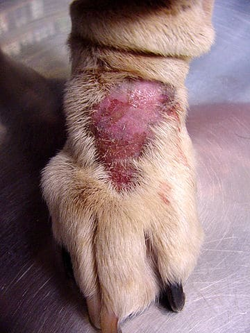 Dog licking hot spot granuloma can coconut oil help soothe pain inflammation