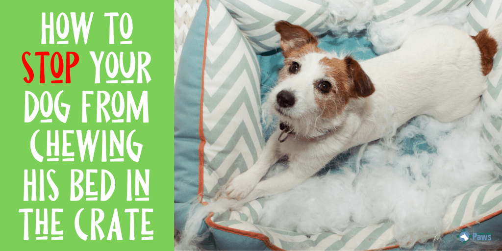 How to Stop Your Dog from Chewing His Dog Bed in the Crate