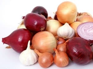 Are onions garlic cloves safe for dogs to chew GI upset anemia