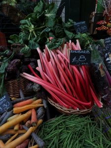 Rhubarb vegetable dangerous for dogs to consume