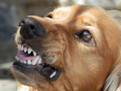 Why sedate your dog before clipping nails aggressive drooling submissive posture