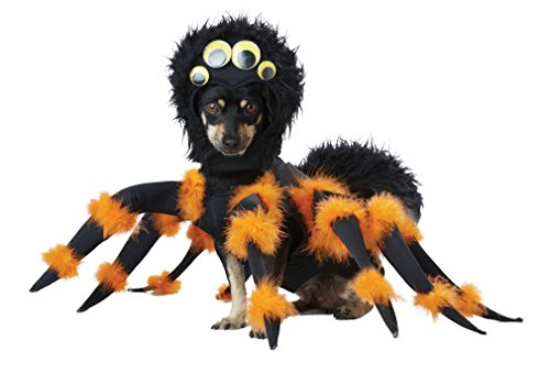 Will eating spiders poison dogs toxic venomous arachnids
