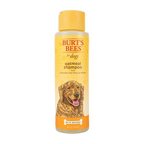 Burt's Bees for Dogs colloidal oatmeal shampoo honey review