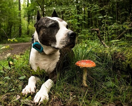 Are mushrooms safe for dogs to eat wild store bought varieties