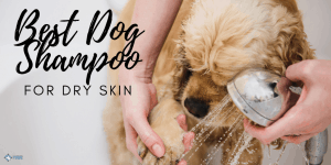 Best Dog Shampoo for Dry Skin