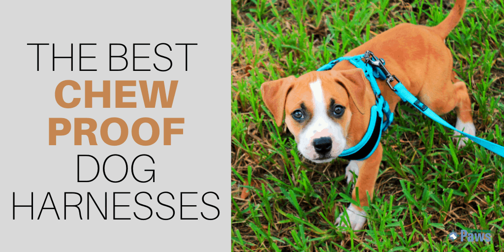 Best Indestructible, Chew Proof Dog Harnesses