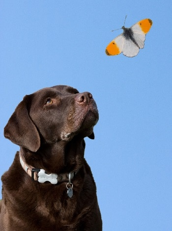 Can dogs eat butterflies dangers of puppies eating bugs