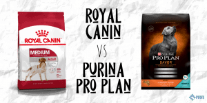 Royal Canin vs Purina Pro Plan Dry Dog Food Review