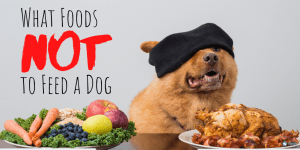 What Foods NOT to Feed a Dog