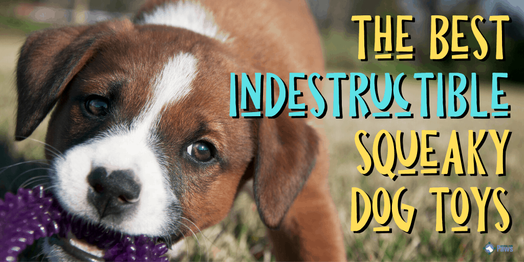Best Indestructible Squeaky Dog Toys for Chewers