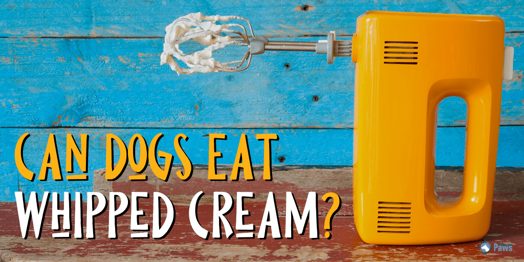 Can Dogs Eat Whipped Cream?
