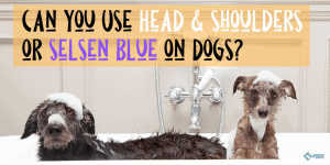 Can you Use Head and Shoulders or Selsen Blue on Dogs