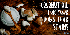 Coconut Oil for Dog Tear Stains_ The Natural Home Remedy