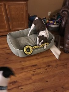 Paws on dog toy review aggressive chewers tearing out squeakers