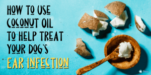 How to Use Coconut Oil to Help Treat Your Dog's Ear Infection