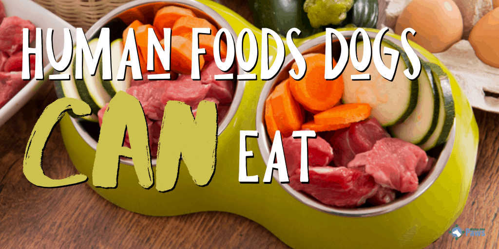 Human Foods Dogs Can Eat (And Are Good For Them!)