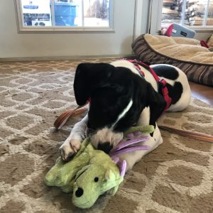 goDog chew toy resists being torn apart by strong jaws