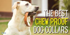 Best Indestructible, Chew Proof Dog Collars