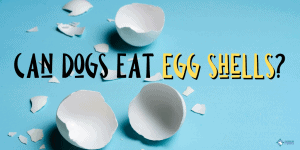 Can Dogs Eat Egg Shells?