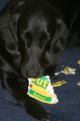 Can dogs eat butter fats good for coat puppy steal margarine