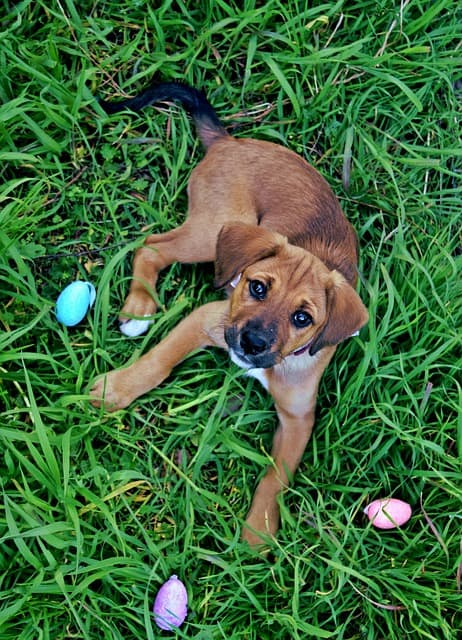 Can puppies eat eggshells safe for young dogs hypercalcemia health problems