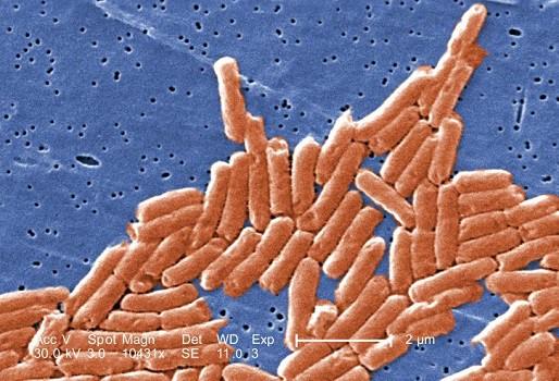Eggshell consumption dangers salmonella poisoning bacteria debris cuts blockage