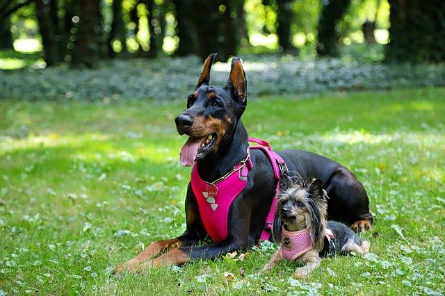 How to pick the best indestructible dog harness for my canine pet