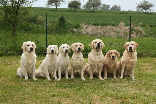 Is Eusoh good for covering multiple dogs large pack best choice