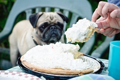 Is it safe to feed dogs whipped cream Dukey by Don LaVange