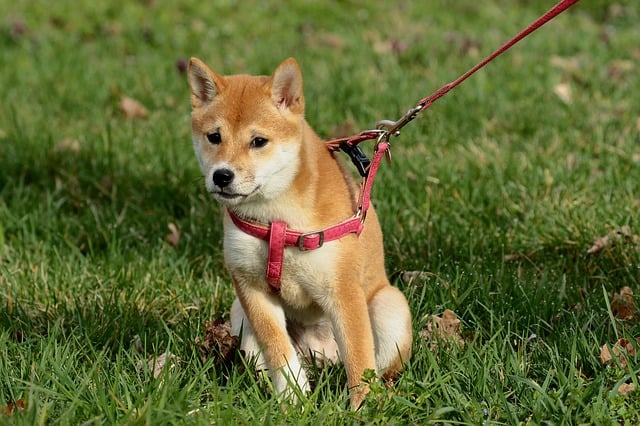What to look for when buying a chew proof dog harness